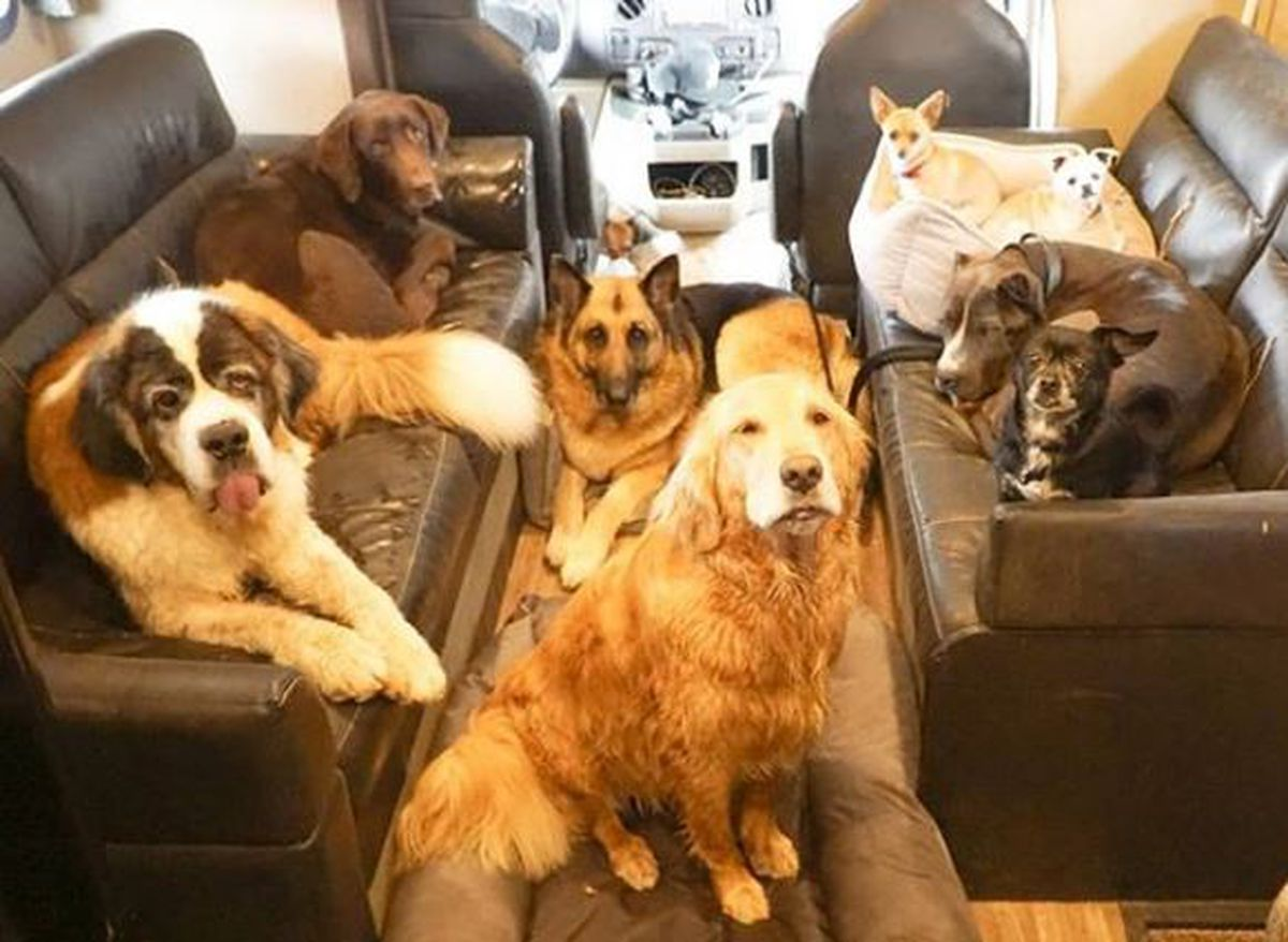 Man travels the US with his rescue dogs advocating 'adopt, not shop'