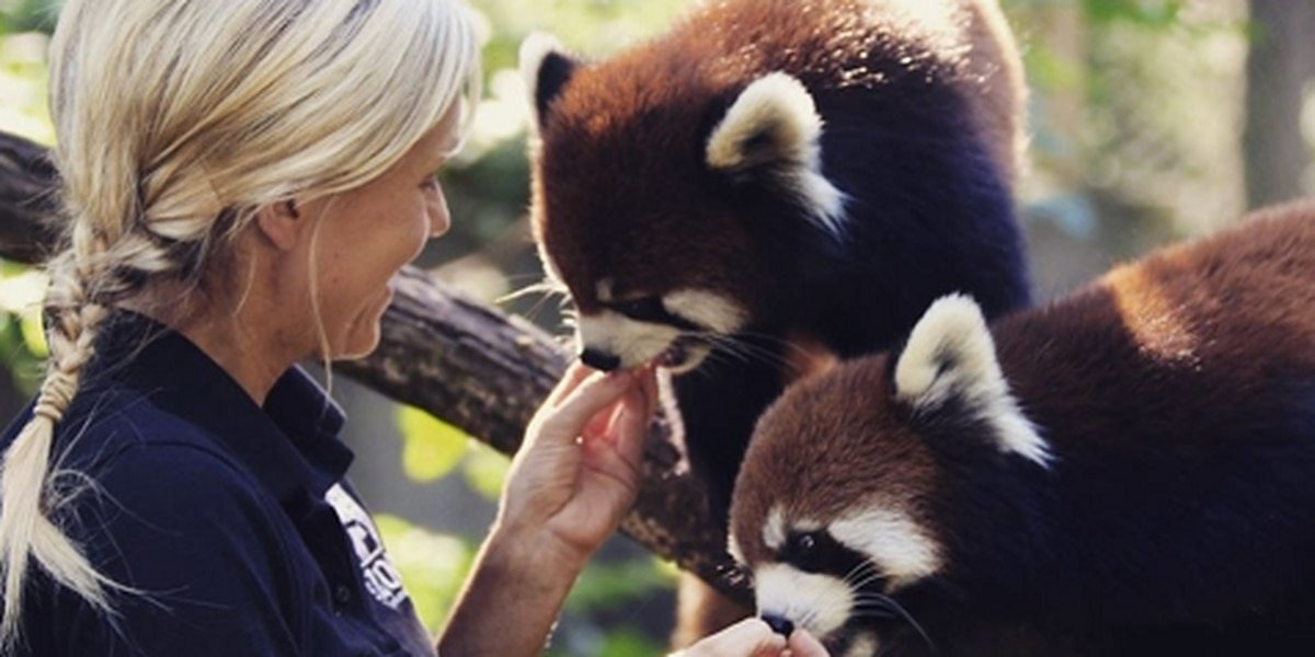 174 laid off, Cincinnati Zoo asks for financial help to feed & care for animals