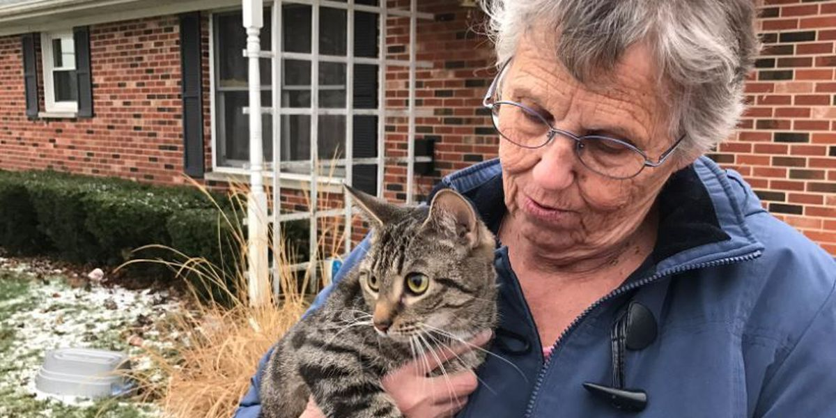 Missing cat turns up days later in a very unlikely situation