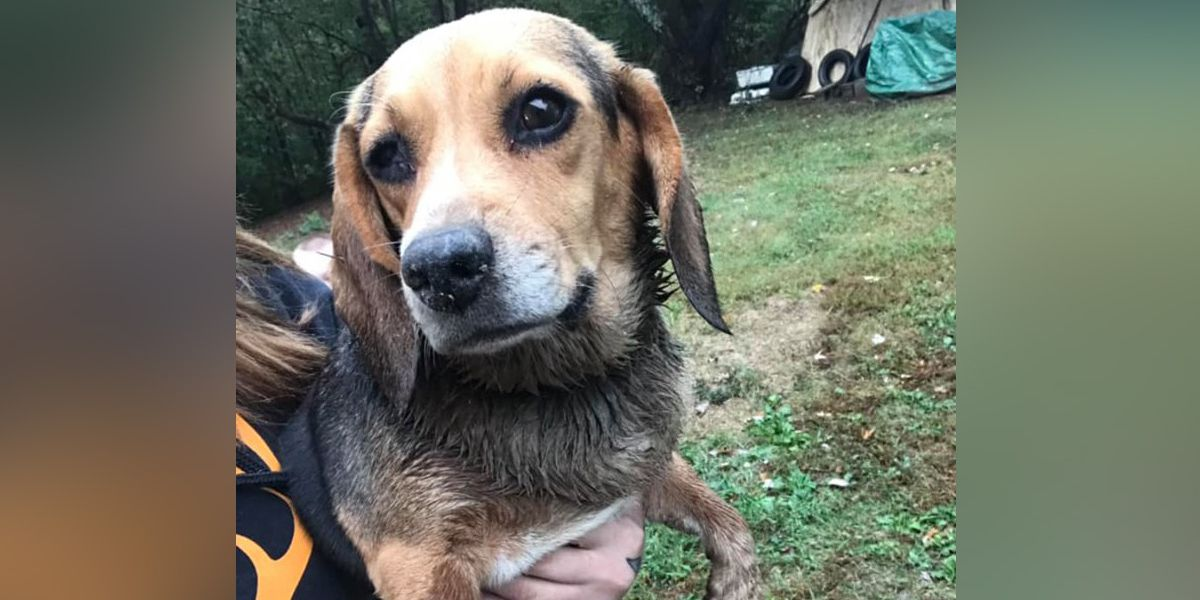 Kentucky shelter working to save dog likely shot in the head