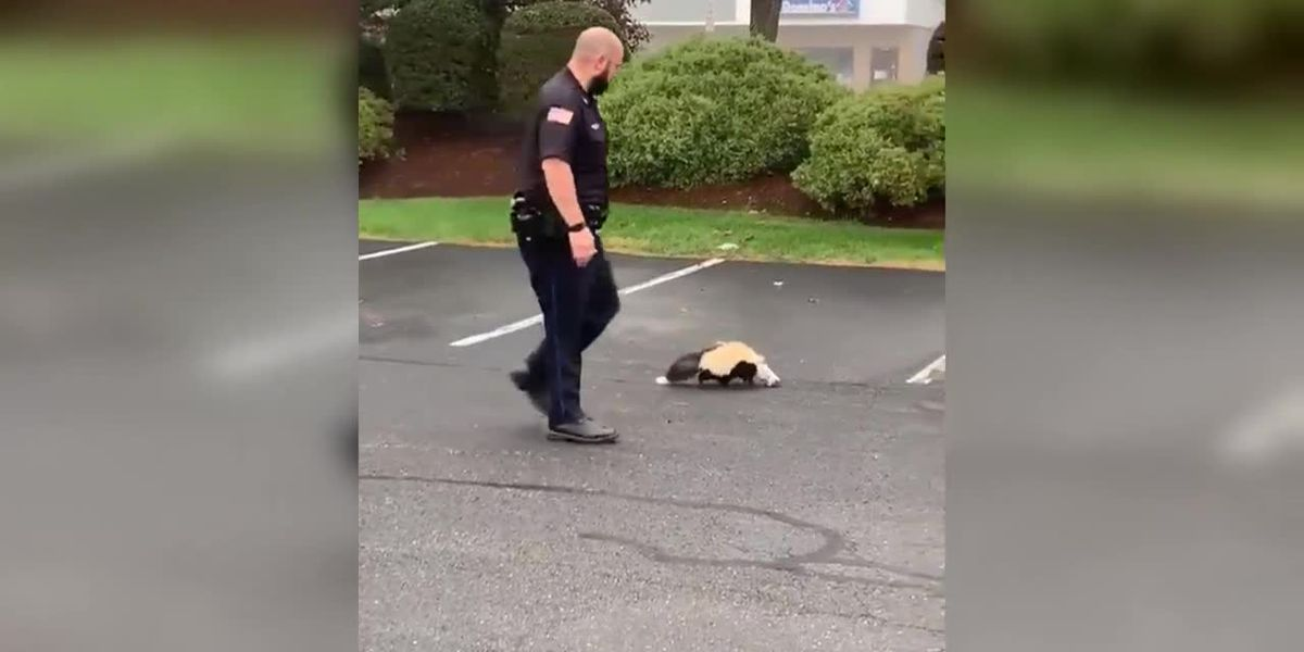 Police officer frees skunk with container stuck on head