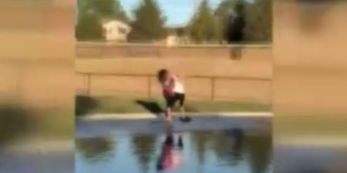 Fight between two women at dog park caught on video