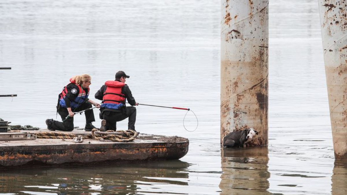 'Very happy to be rescued': Officials save dog stranded in Ohio River