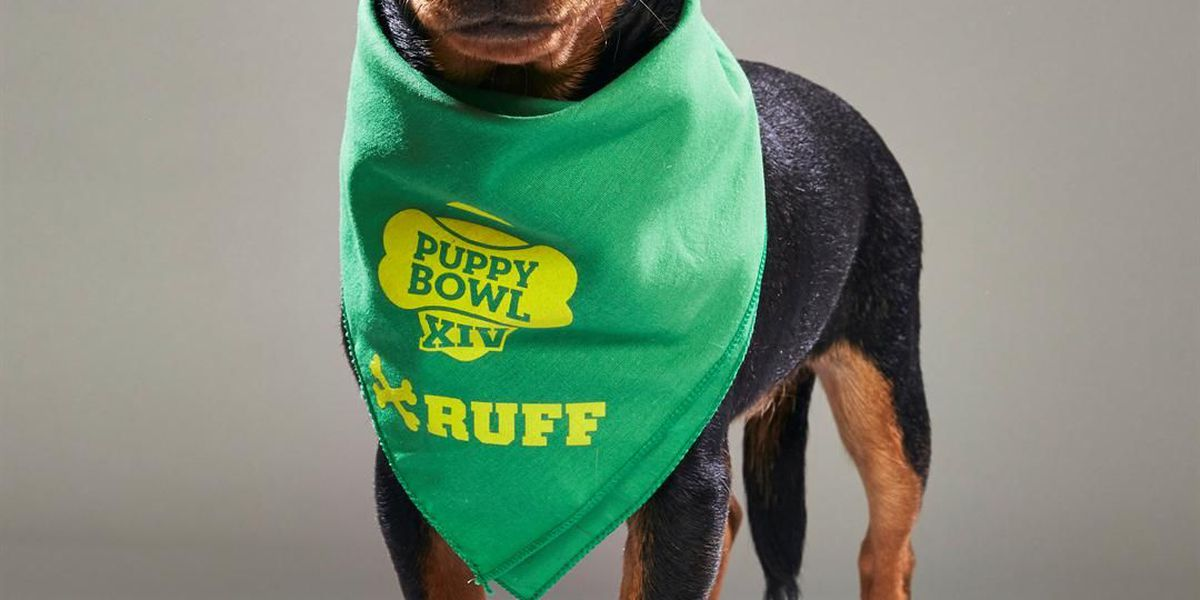 Greater Cincinnati puppies going nose to nose in Puppy Bowl
