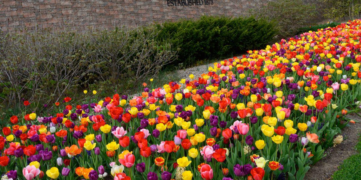 Take a virtual tour of the blooms at Cincinnati Zoo & Botanical Garden