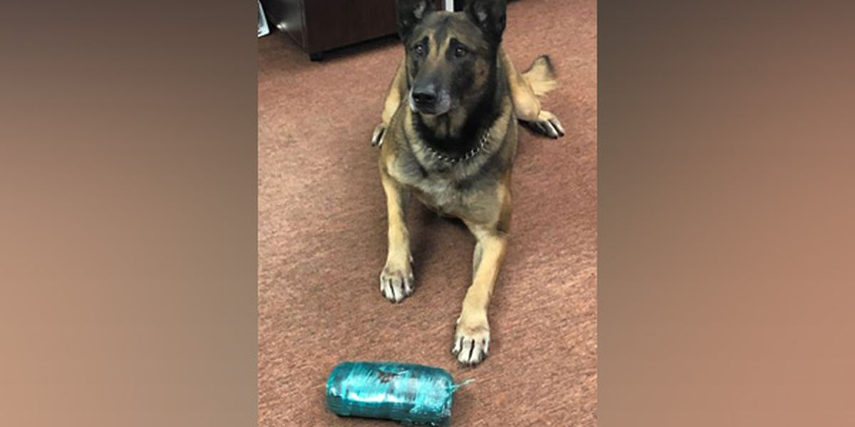 K9 helps seize more than 2 pounds of fentanyl during Butler Co. traffic stop