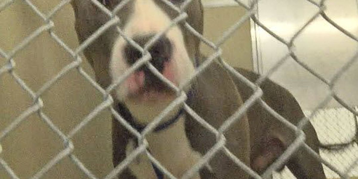 Man to serve 7 days in jail after disturbing dog abuse caught on camera
