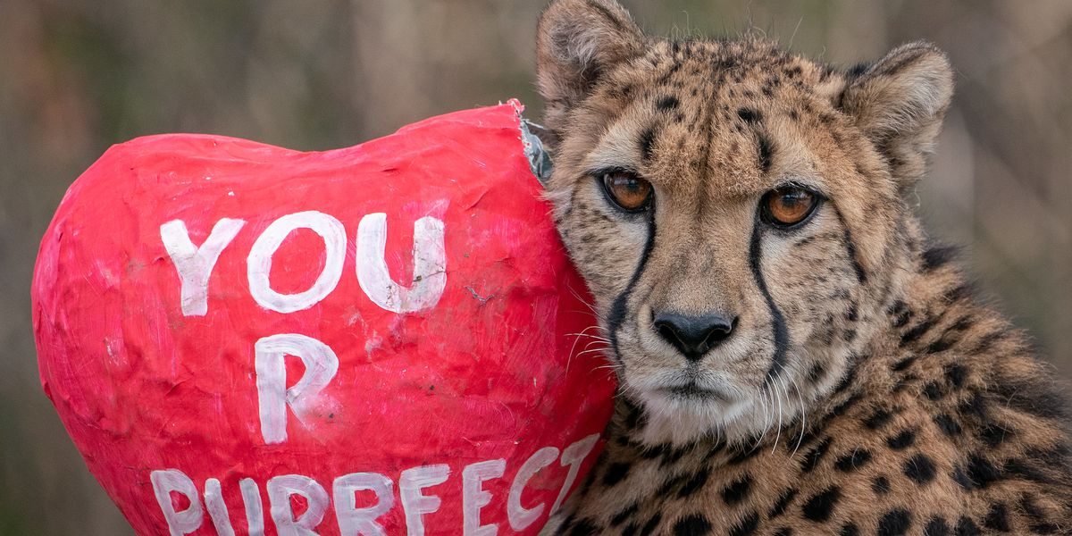 Cincinnati zoo animals share the love this Valentine's Day weekend