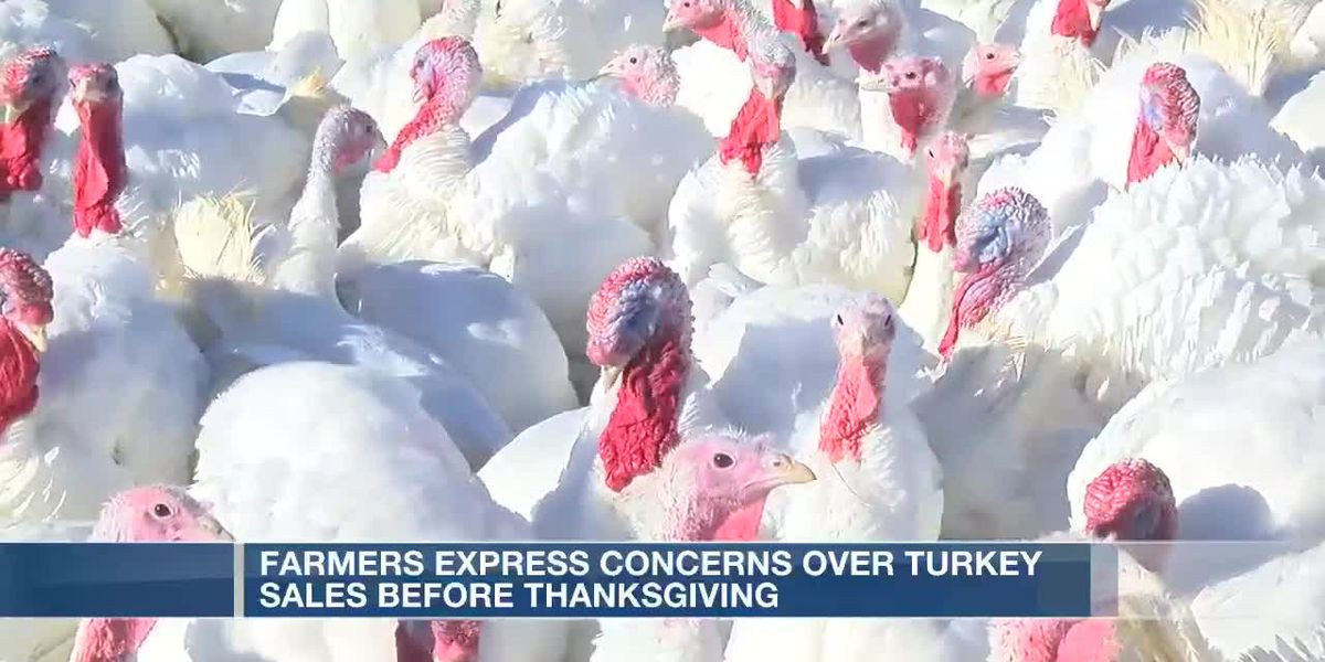 Turkey farms might feel impacts of smaller Thanksgiving gatherings