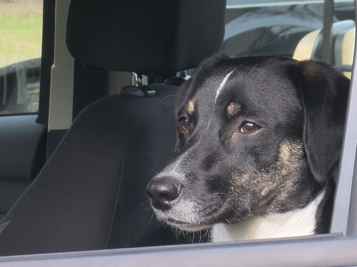 Pierce Township Police on the lookout for dogs in hot cars