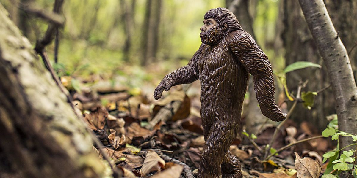 Ohio, it seems, is one of the best places in the U.S. to spot Bigfoot