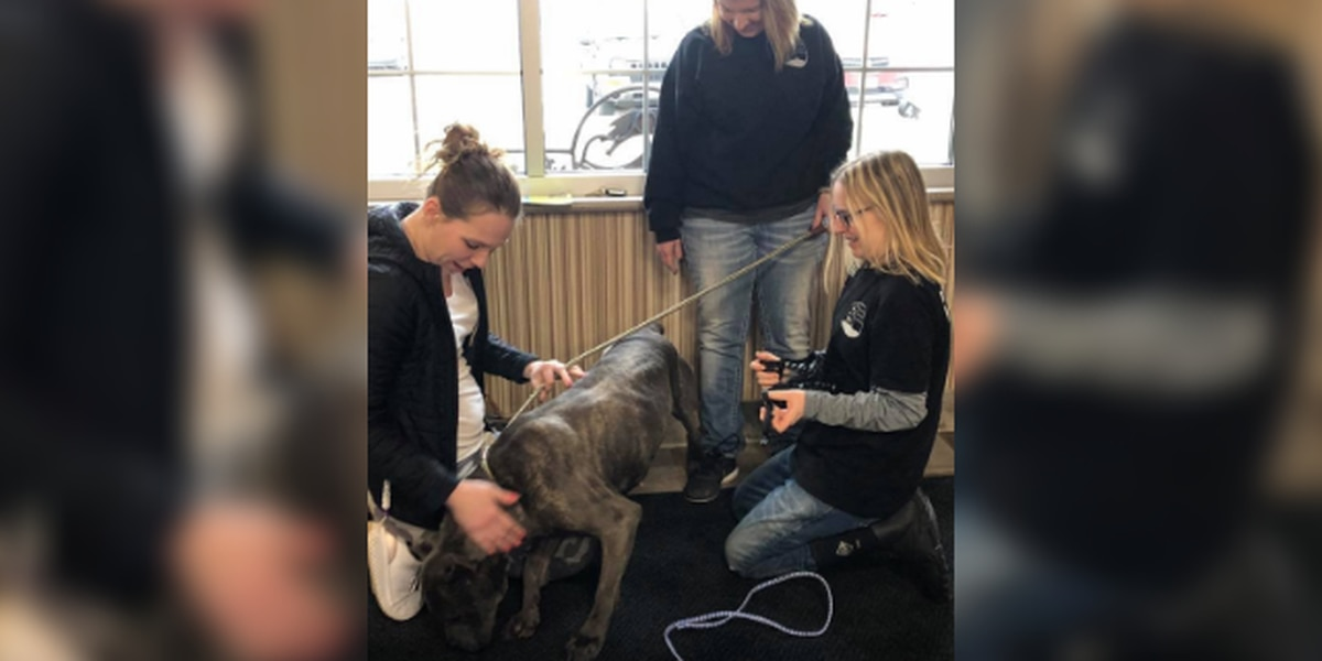 Dog stolen during home break-in reunited with owner in Ohio over a year later