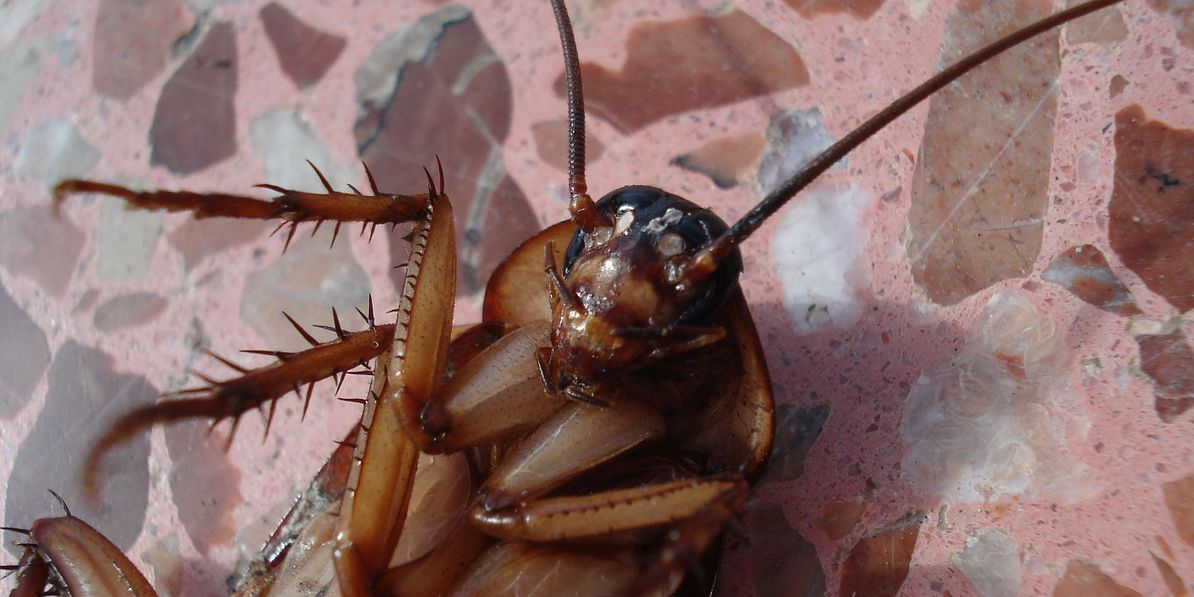 Is the cockroach the new symbol of Valentine's Day?