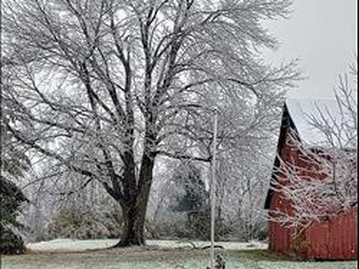 PHOTOS: Ice storm beauty and devastation