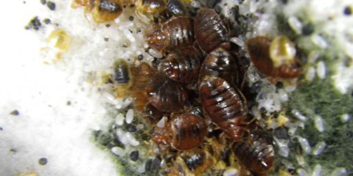 Ohio entomologist develops app to identify bed bugs