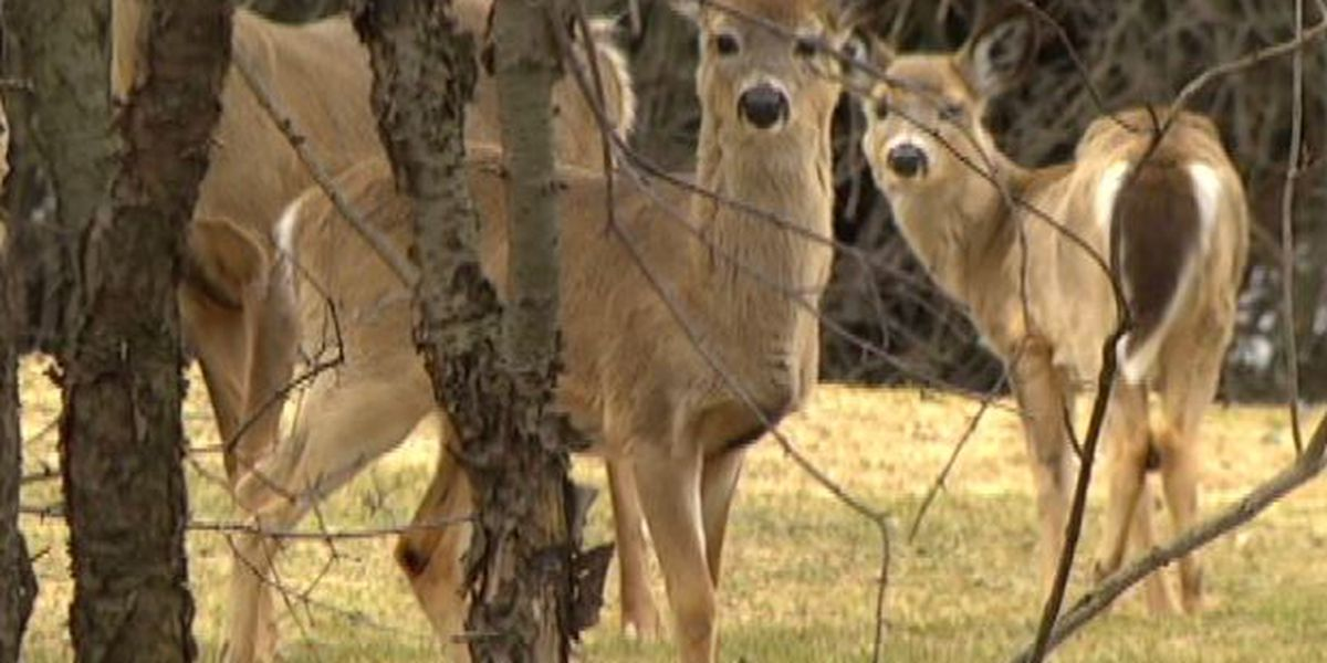 State officials use robotic deer to combat illegal hunting