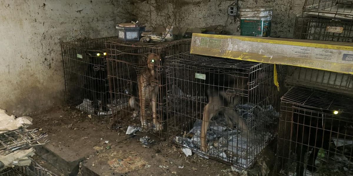 'One of the worst we have seen': About 50 neglected animals, 2 dead dogs found in apparent hoarding situation in Bethel