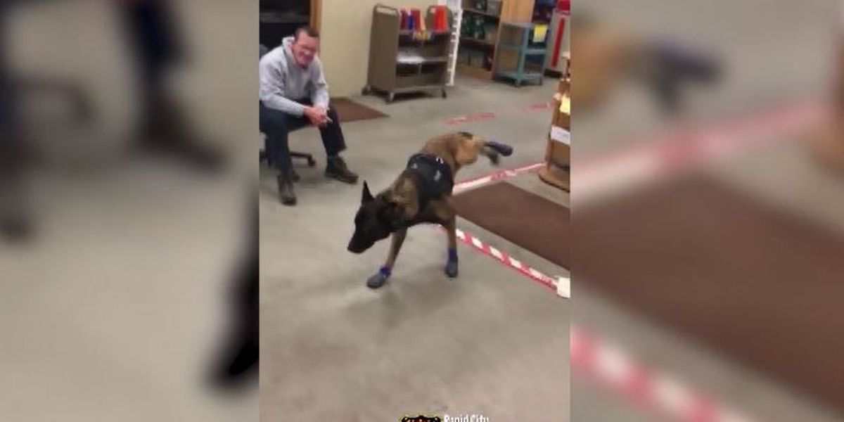 Police dog tries on new snow boots in hilarious, heartwarming video