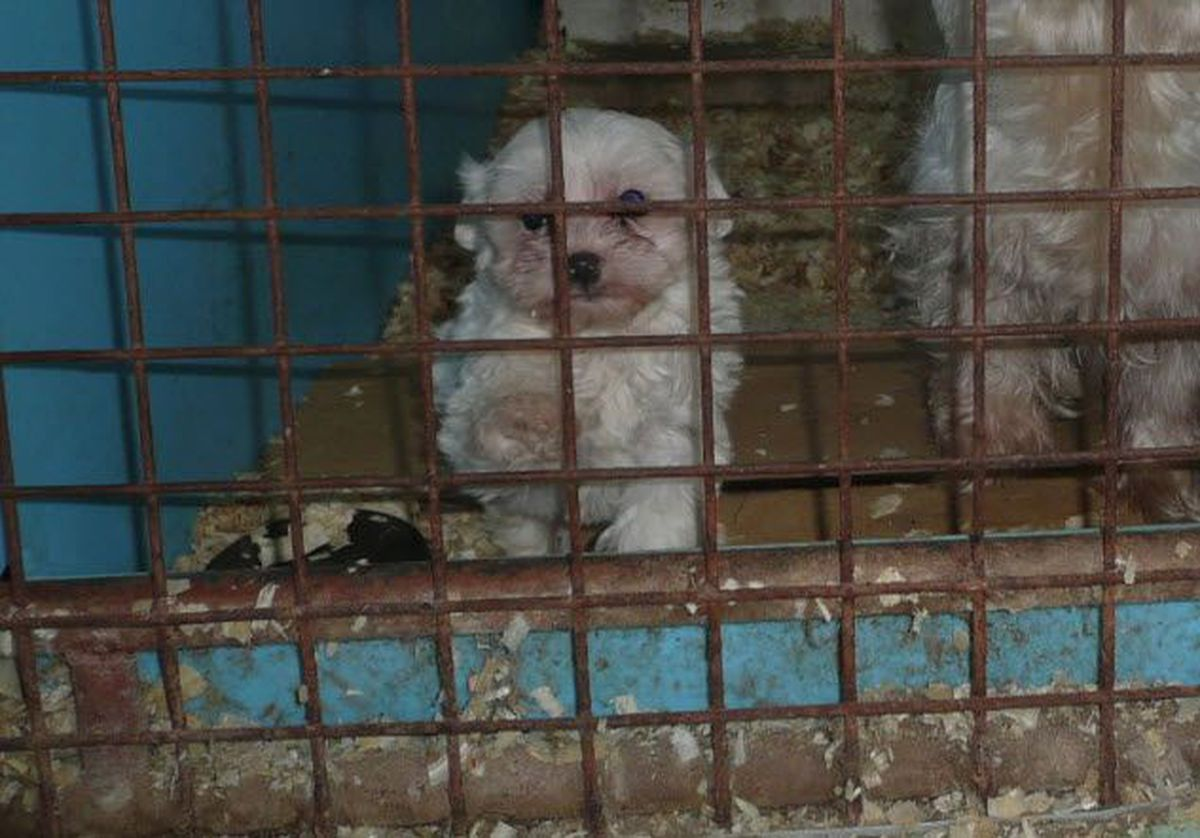12 Oh Kennels Named Among Horrible Hundred Puppy Mills