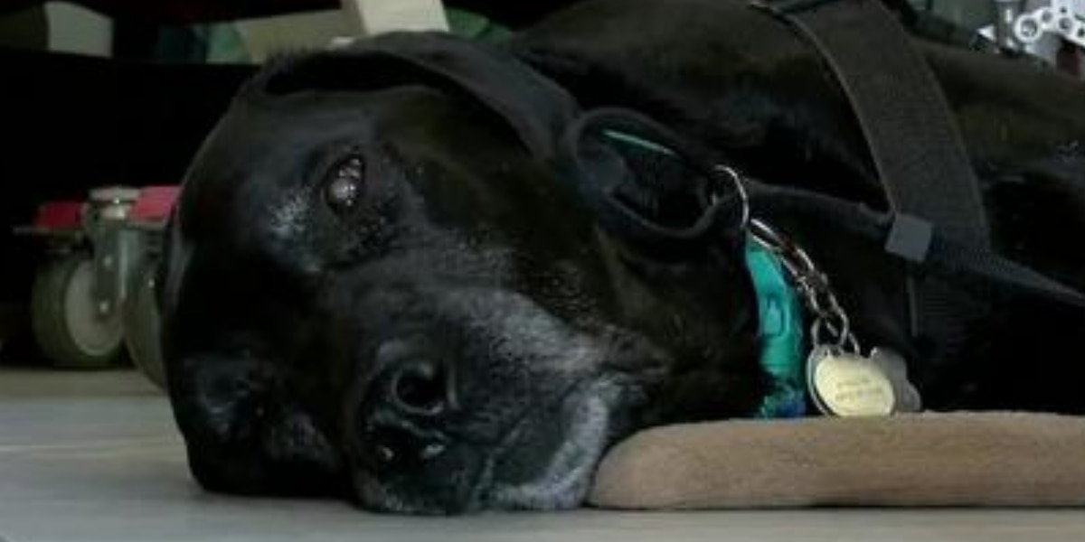 Area family hopes to raise $50,000 to buy new service dogs