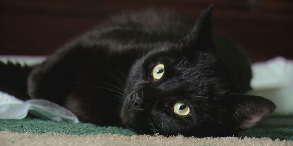 Family warning others after cat returns home with broken bone, wounds from BB gun