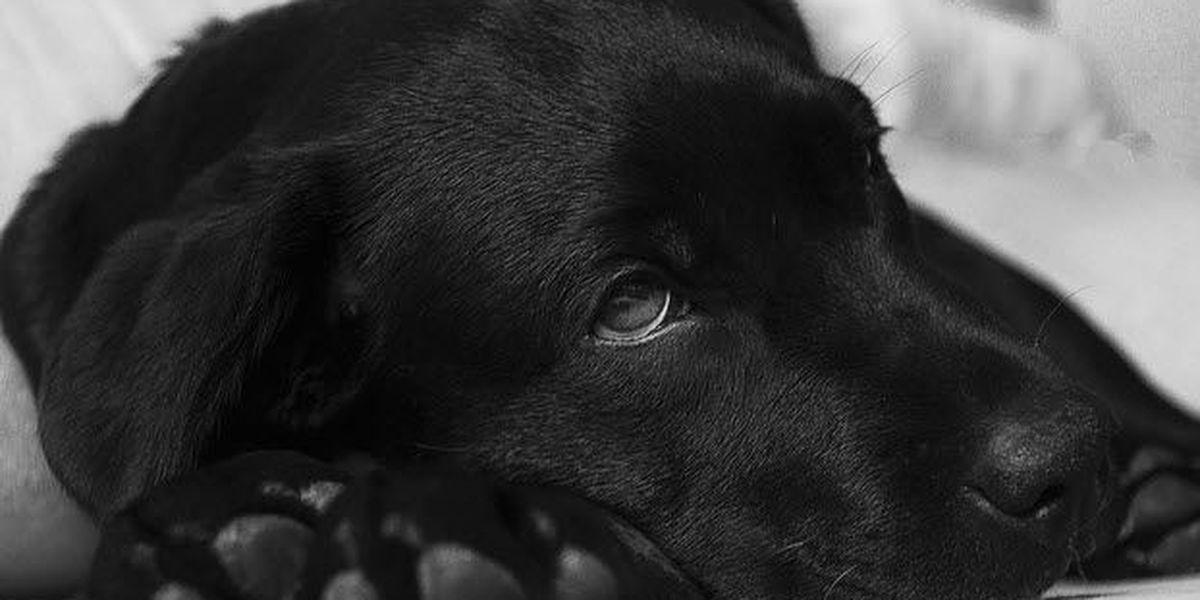 Dog Flu Cases Cross From Cincinnati To Nky