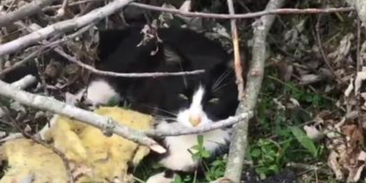 Rescue caring for cats, kittens pulled from rubble left behind by Dayton-area tornadoes