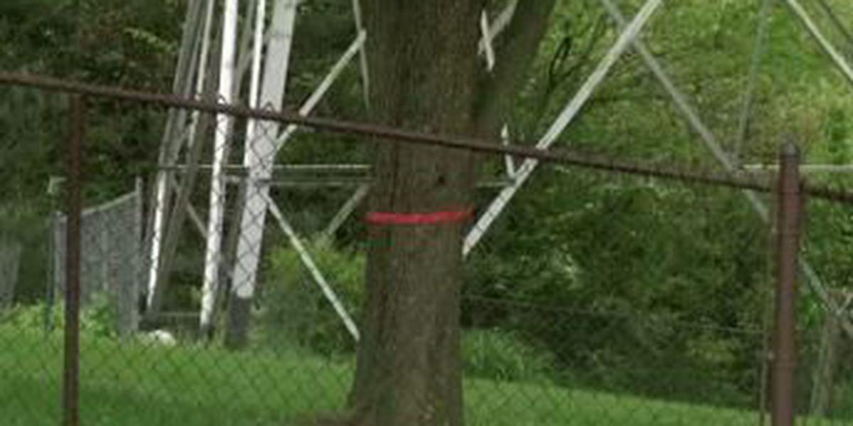 Residents upset with Duke Energy over tree trimming program