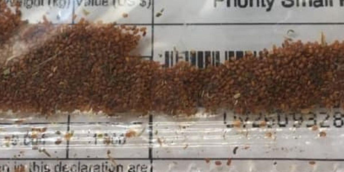Ohio sees increased reports of unsolicited seeds in the mail