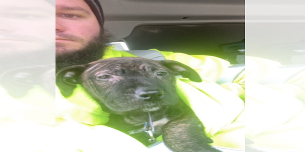 PETA offers reward for information on puppy rescued by Rumpke driver