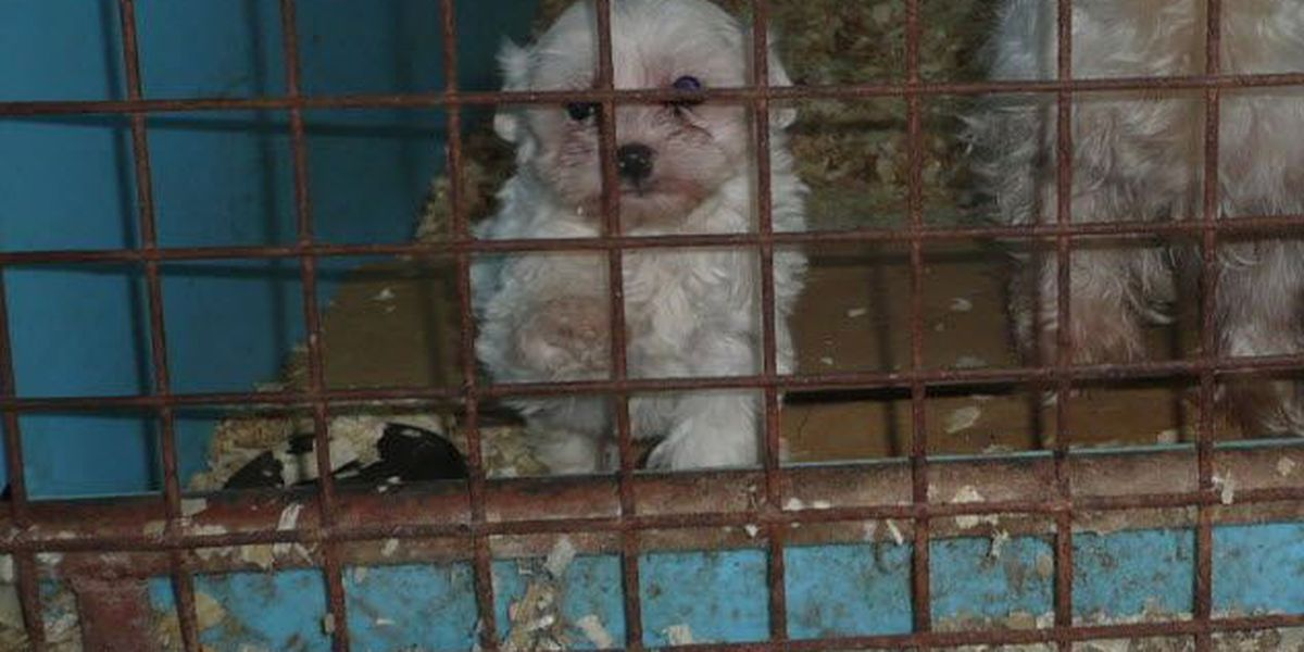 12 OH kennels named among 'Horrible Hundred' puppy mills