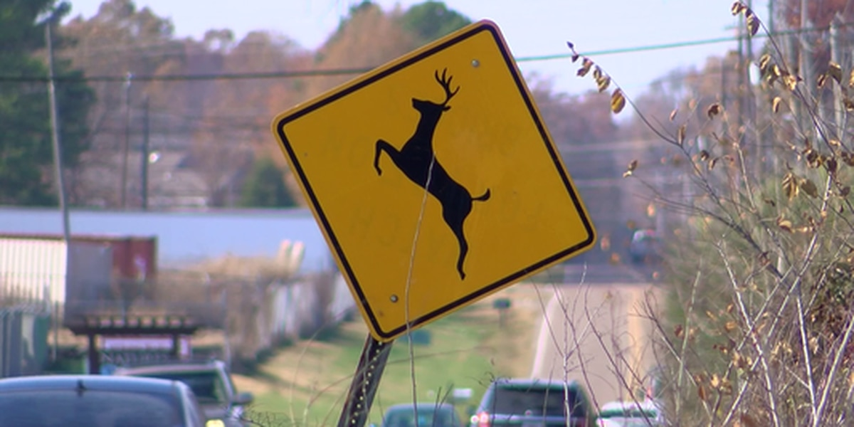 Ohio entering peak months for deer-related crashes