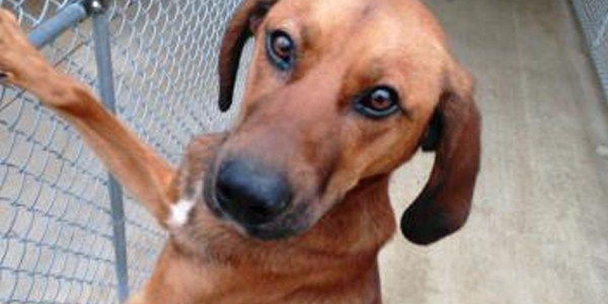 Cincinnati animal shelter offering help to outdoor dog owners