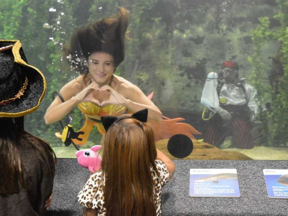 Mermaids return to Newport Aqaurium