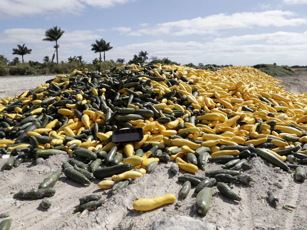 Coronavirus claims an unexpected victim: Florida vegetables