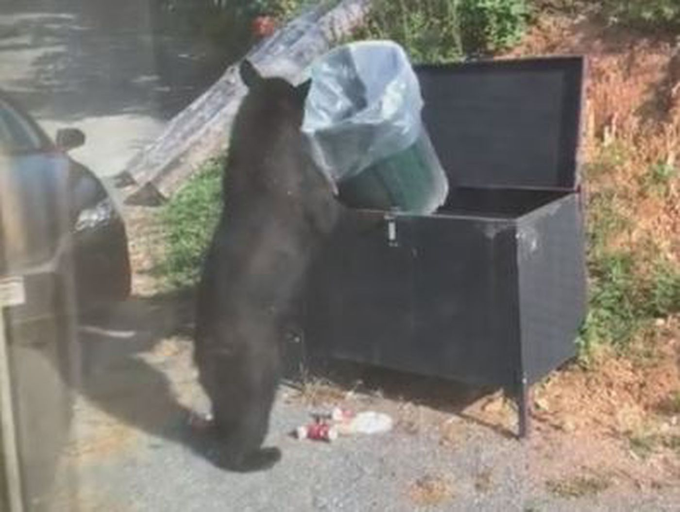 Family watches bear eat, drink Coke out of trash can while vacationing in Gatlinburg
