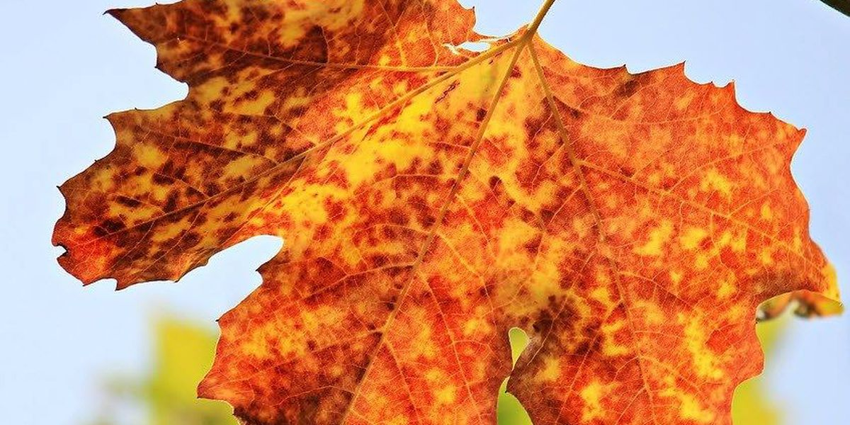 2016 Fall foliage forecast